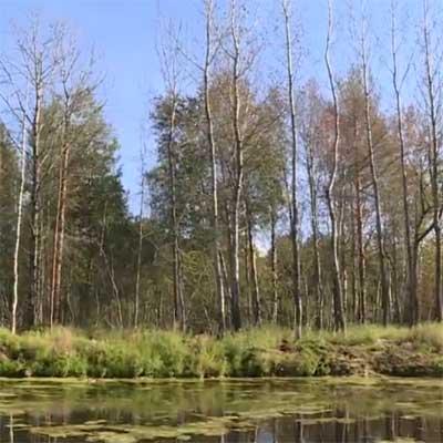 Николаевский государственный природный зоологический (охотничий) заказник